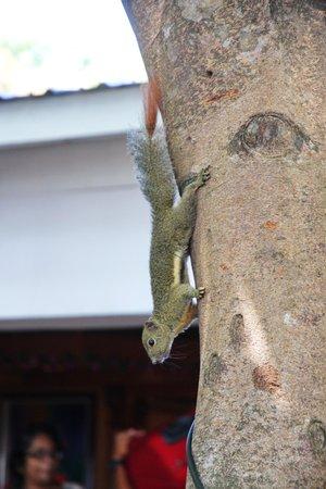 Grey Squirrel..loved it