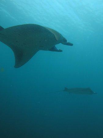 Divine Diving : Manta Point, Komodo National Park