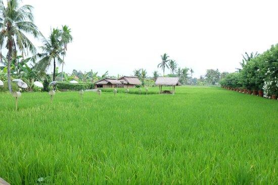 Sardine: Rice Patties