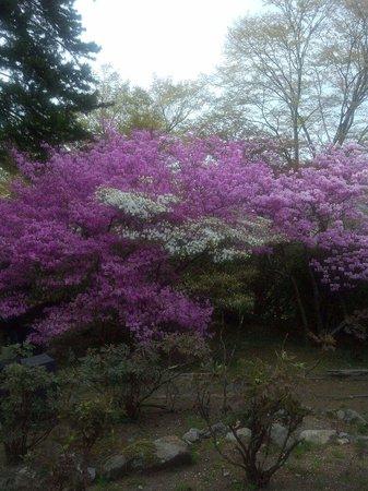 Gora Park: 強羅公園の中でピカイチでした。