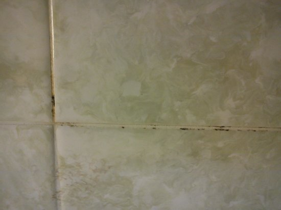 Chatsworth House Hotel: Mould in bathroom to 258, April 2014