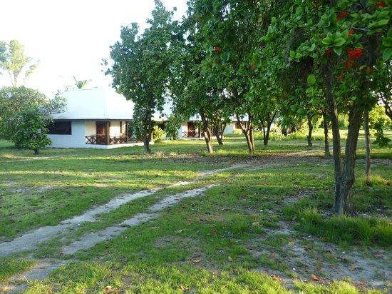 Bird Island, Seszele: vue sur les bungalow depuis le petit chemin