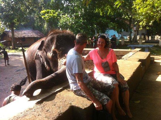 Millennium Elephant Foundation: Rani und wir :)