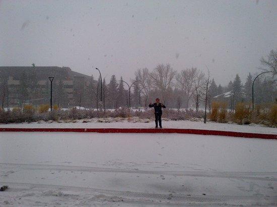 Outside Hotel Picture Of Hotel Alma Calgary Tripadvisor