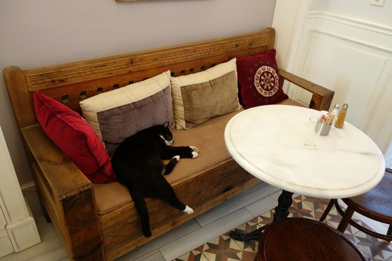 Hotel Empress Zoe: One of three cats...