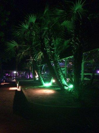 Roca das Mangueiras : Roça à noite