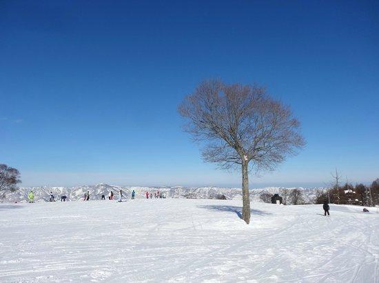 Nozawa Onsen Ski Resort: 野沢温泉スキー場
