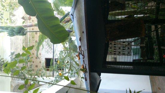 Dar El Assafir : patio de los pájaros