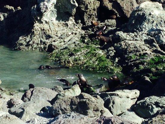 Cape Palliser Lighthouse : Baby fur seals