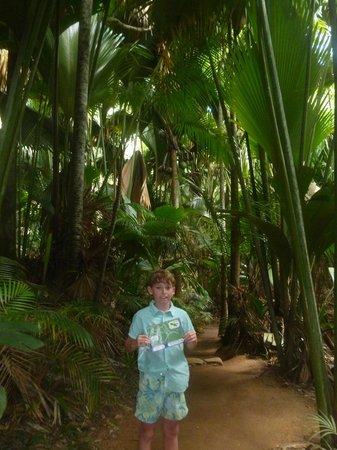 Villas de Mer : Vallée de Mai et ses cocos de mer