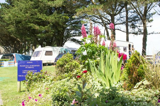 Wheal Rodney Holiday Park: Flowers