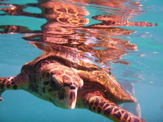 Patatran Village Hotel : tortue lors d'une plongée