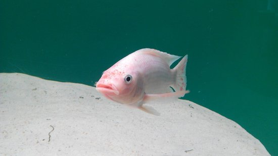 Aquarium Finisterrae: Foto