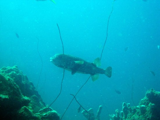 Twin Divers Cracao: fish
