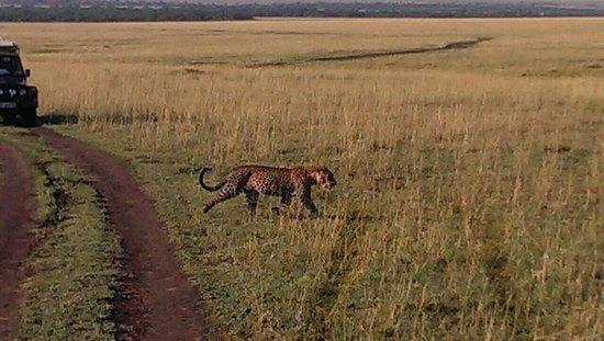 Loyk Mara Luxury Camp: Leopard
