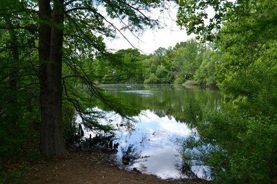 San Antonio Botanical Garden: Pond
