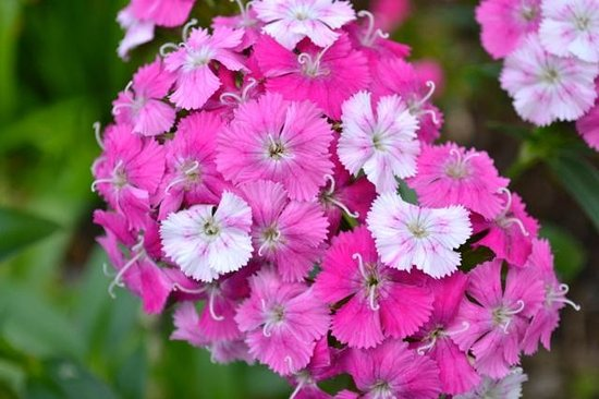 San Antonio Botanical Garden: Flowers