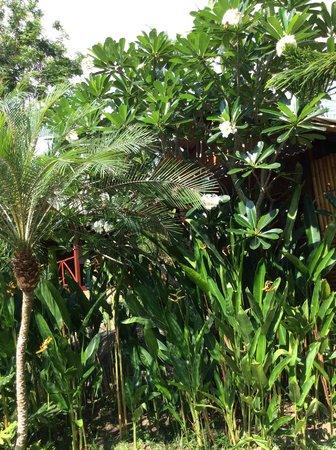 Baan Sukreep - Zen Garden Cottages: jardin