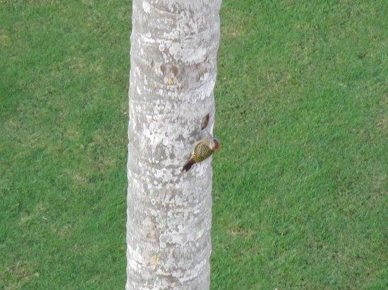 Hotel Riu Palace Macao: Woodpecker taken from balcony