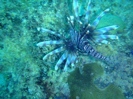 Hotel Riu Palace Macao: Good scuba diving