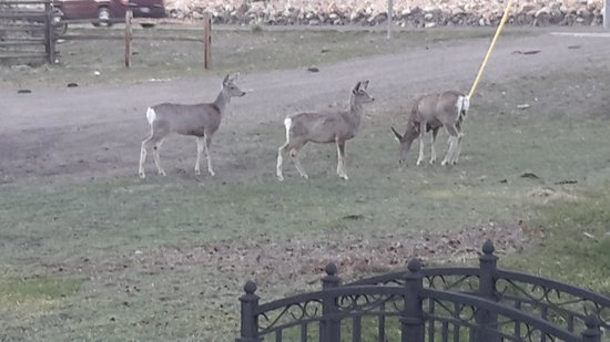 Best Western By Mammoth Hot Springs: visitors on the hotel grounds