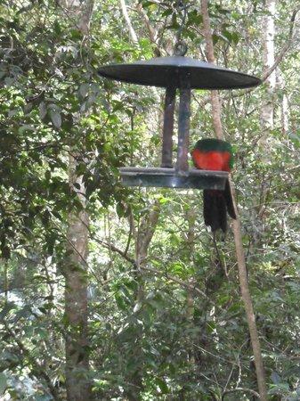 Narrows Escape Rainforest Retreat : View outside our door