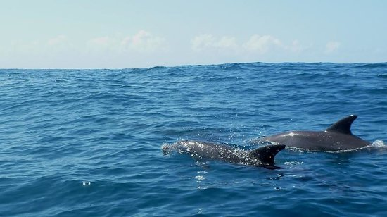 Barra Beach Club: Dolphins out on our sea-safari