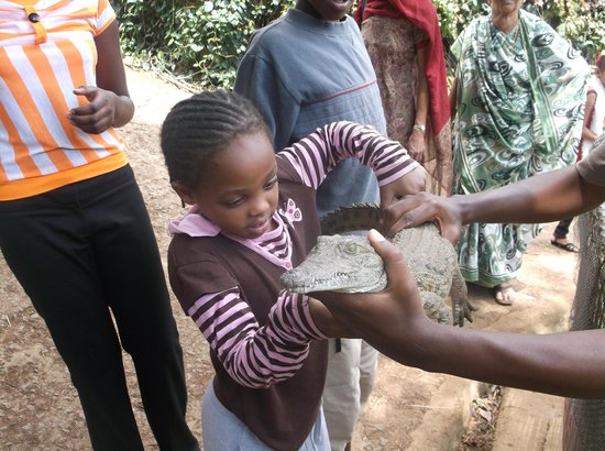Nairobi Mamba Village: teaching my girl how to pick a crocodile