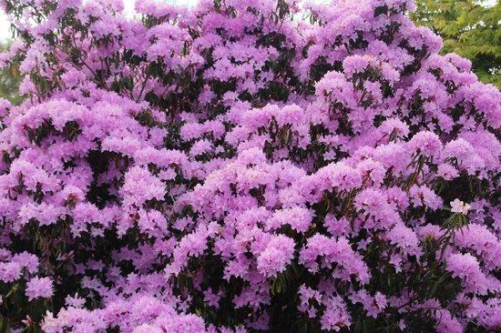 Nymans Gardens and House: Fantastic shrubs