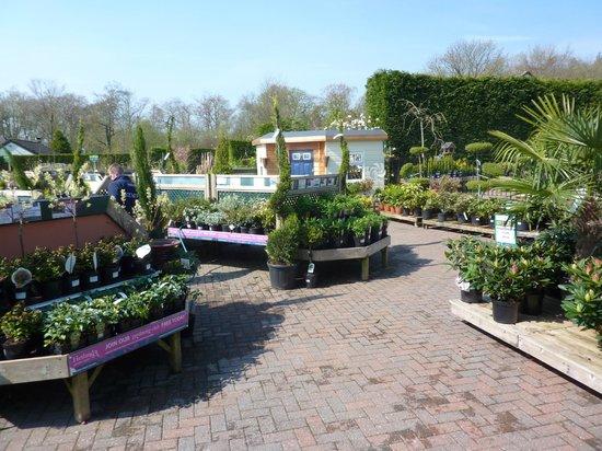 Hetland Garden Centre: Top Plant Area