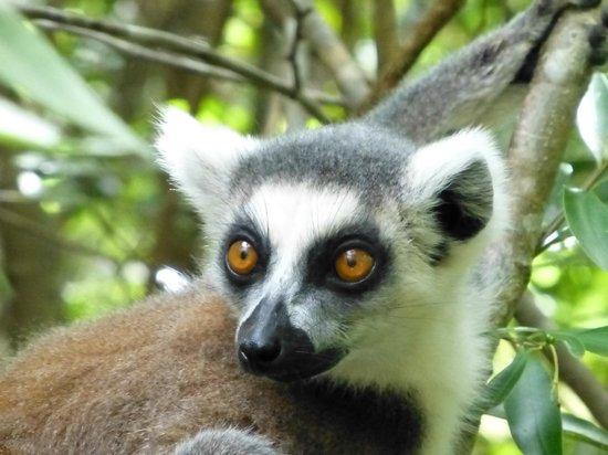 Anja Reserve: Très beaux yeux
