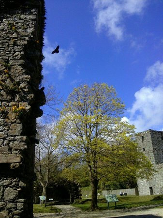 Rushen Abbey: Pidgeon Tower with bird in flight.