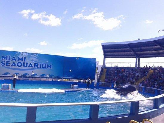 Miami Seaquarium: Baleia