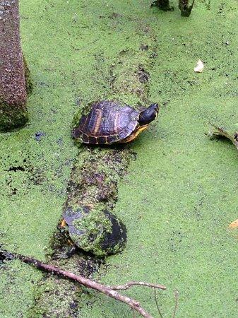 Busch Wildlife Sanctuary : Lots of reptiles