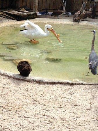 Busch Wildlife Sanctuary : Many birds