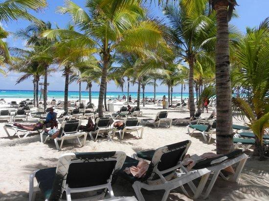 Hotel Riu Playacar : Beach,you can choose full sun or under shaded tree's :)
