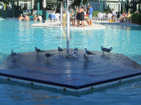 Breezes Resort & Spa Bahamas: SeaGulls on pool fountain