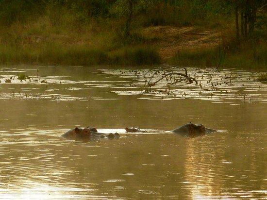Horizon Horseback Adventures Lodge: hippos in the lake