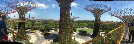Marina Bay Sands Skypark: trees in the park