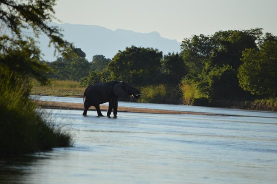 Kapamba Bushcamp - The Bushcamp Company : Elephant having a drink from Kapamba River