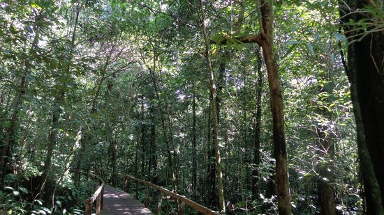 Mulu World Heritage Area Accommodation : Boardwalk outside the hostel
