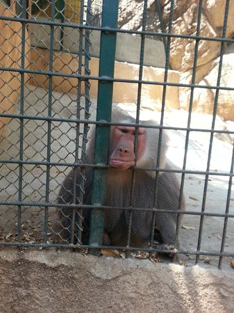 Vallarta Zoo: This guy is not amused