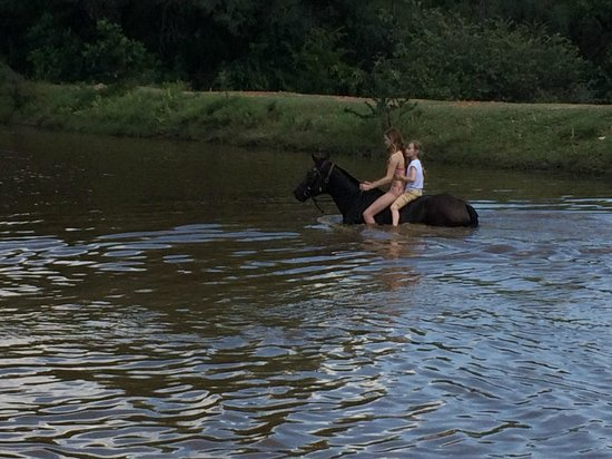 Ant's Hill & Ant's Nest : swimming with horses