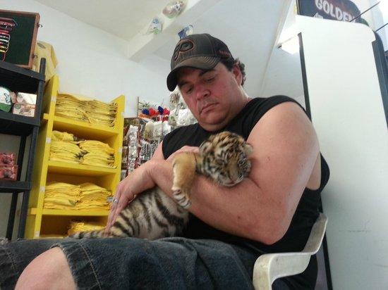 Vallarta Zoo: 13-day-old bengal tiger cub
