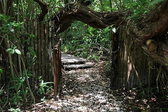 Muyil : Entrance to the eco path