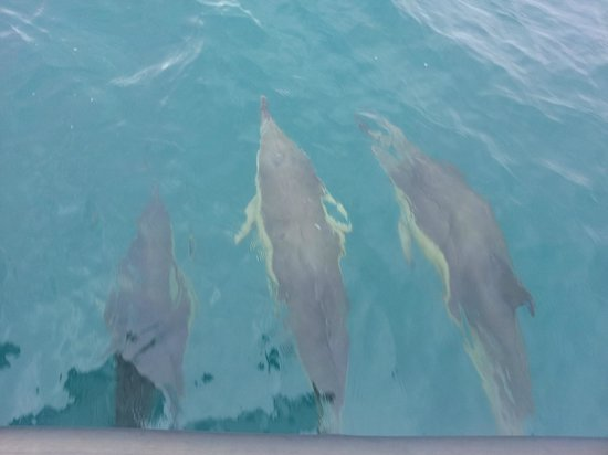 Whale Watch West Cork : Common Dolphins