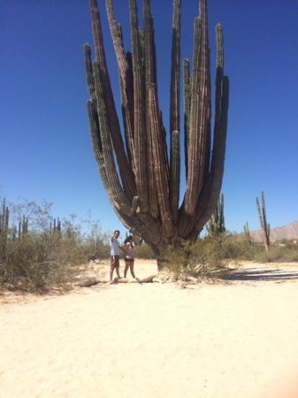 Valley of the Giants (Sierra de los Organos): Giant