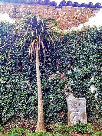 Ganesha Posada : Jardines