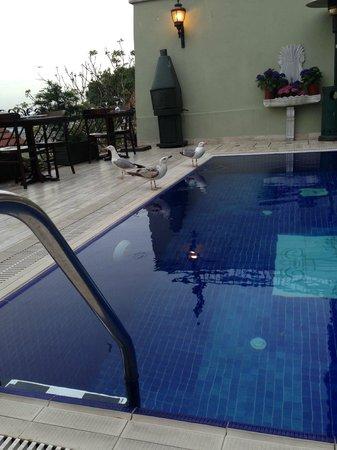Hayriye Hanim Konagi Hotel: Piscina
