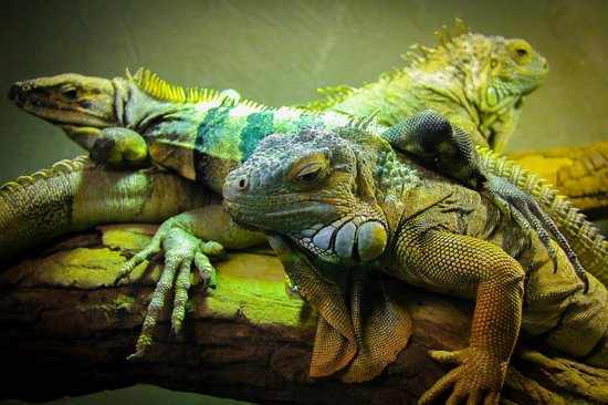 Reptilia Zoo and Education Centre Vaughan